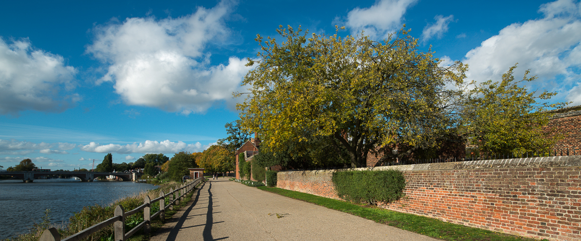 Autumn Colours October 23 Hampton Court