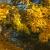 Autumn photos taken in Molesey