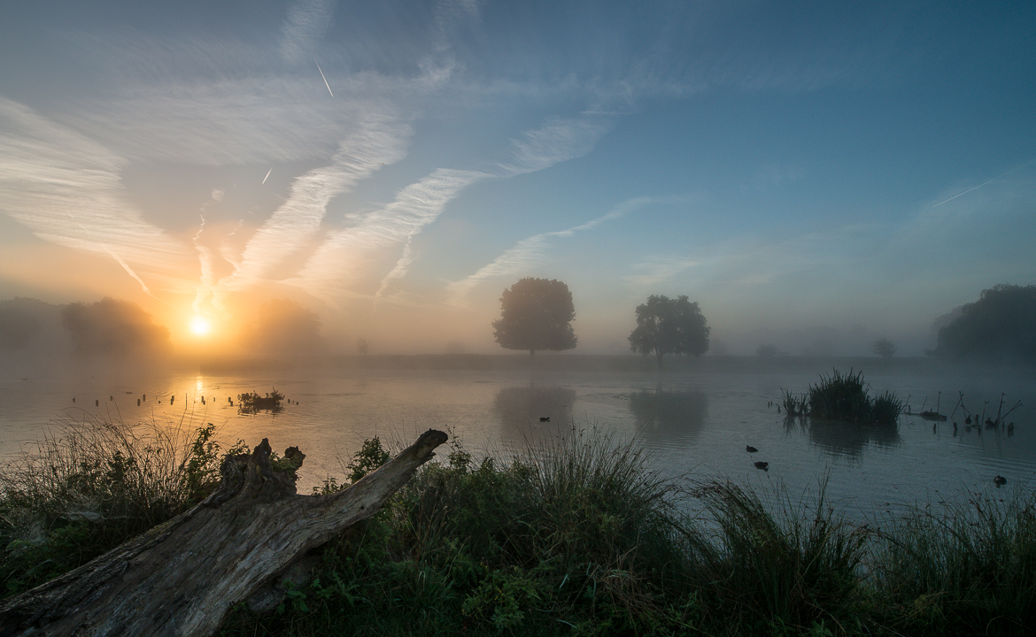 Bushy Park sunrise photography 6 Oct 2013
