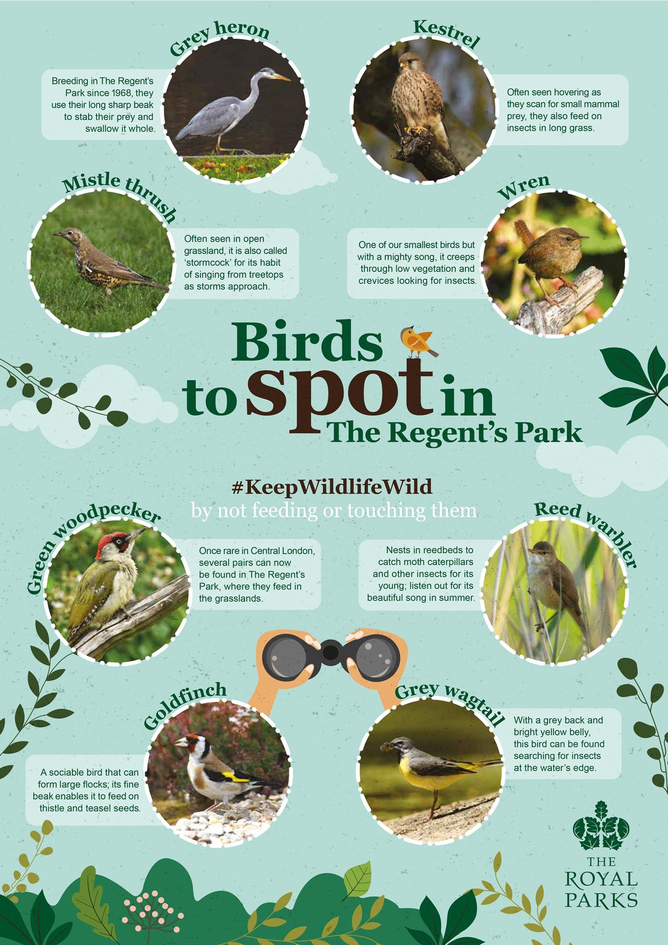 Royal Park Bird Spotter REGENTS